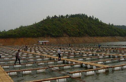 浙江养殖用浮球